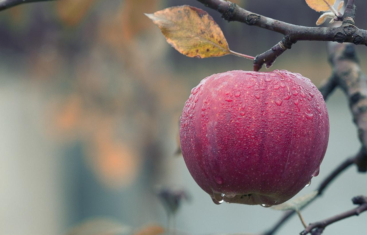 Lähiruoka voi tulla esimerkiksi omenapuusta omalta pihalta